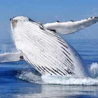 Float plane - Quebec city - Whales - Tadoussac